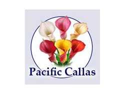 Pacific Callas